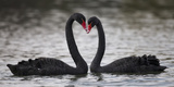 In Love Photographic Print by C.S. Tjandra