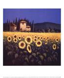 Calore dorato II Stampe di David Short