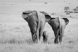 Three Butts! Photographic Print by Ali Khataw
