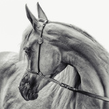 The Arabian Horse Photographic Print by Piet Flour