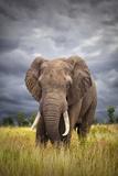 The Big Bull Photographic Print by Mario Moreno