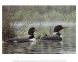 Northern Reflections - Loons Prints by Don Li-Leger