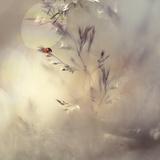 Little Lady Photographic Print by Heidi Westum