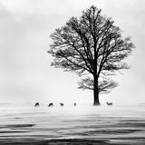 Roes Reproduction photographique par  Dansiga