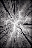 Circulatory System of the Forest Photographic Print by Alexandr Popovsky