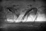 Battle in Black and White Photographic Print by Jaco Marx