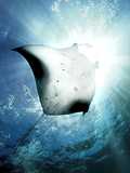 Sun Diver Photographic Print by Henry Jager