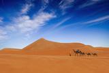 Desert Life Photographic Print by Hesham Alhumaid