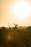Awesome South Africa Collection - Savanna at Sunrise IV Photographic Print by Philippe Hugonnard