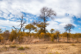 Awesome South Africa Collection - African Savanna Trees XI Photographic Print by Philippe Hugonnard