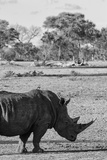 Awesome South Africa Collection B&W - Black Rhinoceros with Oxpecker II Photographic Print by Philippe Hugonnard