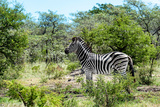 Awesome South Africa Collection - Burchell's Zebra IV Photographic Print by Philippe Hugonnard