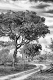 Awesome South Africa Collection B&W - African Landscape with Acacia Tree VIII Photographic Print by Philippe Hugonnard