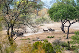Awesome South Africa Collection - Zebras Migration in Savanna Photographic Print by Philippe Hugonnard