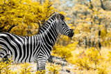 Awesome South Africa Collection - Burchell's Zebra IX Photographic Print by Philippe Hugonnard