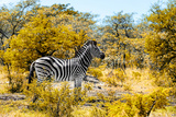 Awesome South Africa Collection - Burchell's Zebra V Photographic Print by Philippe Hugonnard