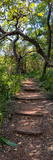 Awesome South Africa Collection Panoramic - African Forest Photographic Print by Philippe Hugonnard