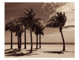 Key Biscayne I Posters by Dennis Kelly