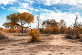 Awesome South Africa Collection - Savanna Landscape IX Photographic Print by Philippe Hugonnard