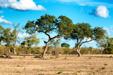 Awesome South Africa Collection - Savanna Landscape Photographic Print by Philippe Hugonnard
