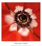 Anemone Prints by Andrew Levine