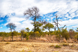 Awesome South Africa Collection - African Savanna Trees X Photographic Print by Philippe Hugonnard