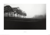 Fog Tree Study III Poster by Jamie Cook