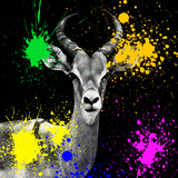 Safari Colors Pop Collection - Antelope Reedbuck IV Giclee Print by Philippe Hugonnard