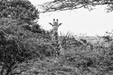 Awesome South Africa Collection B&W - Curious Giraffe Photographic Print by Philippe Hugonnard