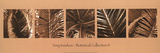 Botanical Collection II Prints by Tony Koukos