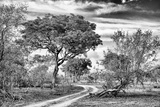 Awesome South Africa Collection B&W - African Landscape with Acacia Tree VII Photographic Print by Philippe Hugonnard