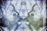 Awesome South Africa Collection - Reflection of Greater Kudu - Powder Blue & Grey Photographic Print by Philippe Hugonnard