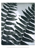 Fern Detail II Posters by Boyce Watt