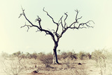 Awesome South Africa Collection - Savanna Tree X Photographic Print by Philippe Hugonnard