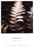 Moonglow IV Prints by Heather Johnston
