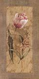 Antique Tulip Art by Stefania Carlini
