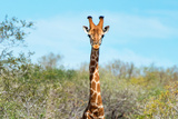 Awesome South Africa Collection - Giraffe Portrait Photographic Print by Philippe Hugonnard