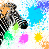 Safari Colors Pop Collection - Zebra Giclee Print by Philippe Hugonnard