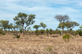Awesome South Africa Collection - African Savannah Photographic Print by Philippe Hugonnard