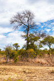 Awesome South Africa Collection - African Savanna Trees XII Photographic Print by Philippe Hugonnard