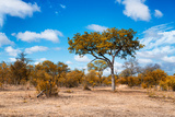 Awesome South Africa Collection - African Savanna Trees VII Photographic Print by Philippe Hugonnard