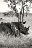 Awesome South Africa Collection B&W - Two White Rhinoceros II Photographic Print by Philippe Hugonnard