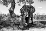 Awesome South Africa Collection B&W - Elephant I Photographic Print by Philippe Hugonnard