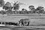 Awesome South Africa Collection B&W - Black Rhinoceros Photographic Print by Philippe Hugonnard