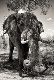 Awesome South Africa Collection B&W - Elephant II Photographic Print by Philippe Hugonnard