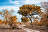 Awesome South Africa Collection - Savanna Landscape I Photographic Print by Philippe Hugonnard