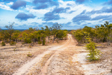 Awesome South Africa Collection - Savanna Landscape XIII Photographic Print by Philippe Hugonnard