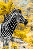 Awesome South Africa Collection - Burchell's Zebra XI Photographic Print by Philippe Hugonnard