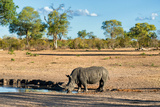 Awesome South Africa Collection - Black Rhinoceros and Savanna Landscape Fotografisk tryk af Philippe Hugonnard