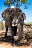 Awesome South Africa Collection - African Elephant II Photographic Print by Philippe Hugonnard